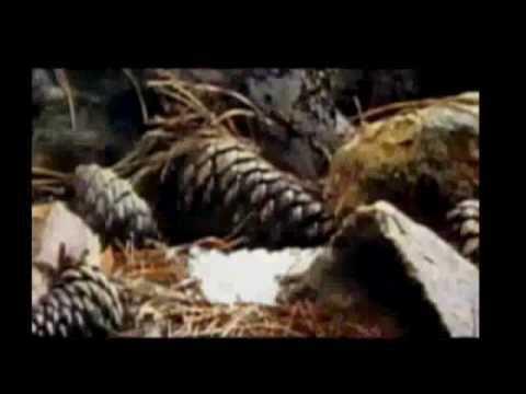 Linkin Park - Valentines Day (Music Video)